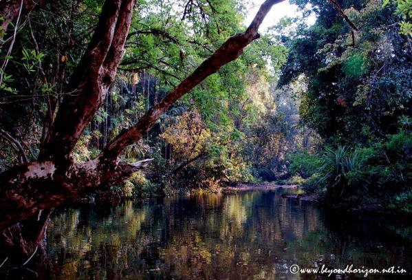 Agumbe_Pool